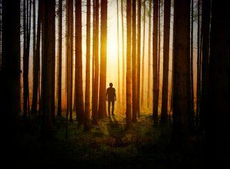 Man (70) vermist na wandeling in bos